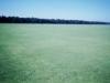 grass2012